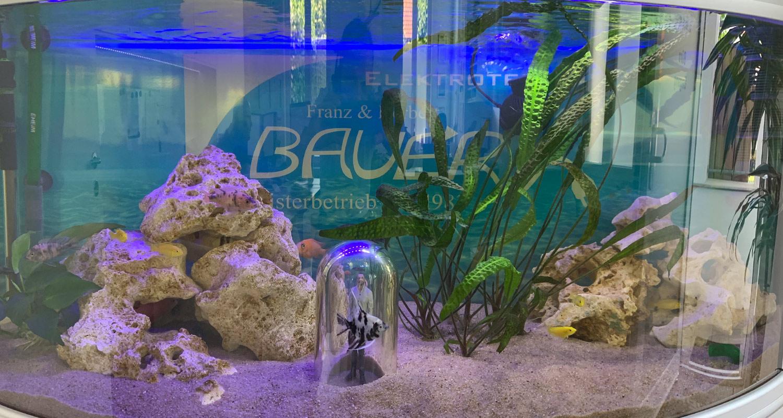 Aquarium 4 - Bauer Elektrotechnik Gilching - Ihr Spezialist für Elektrotechnik in Gilching, Starnberg, Germering, Fürstenfeldbruck und München